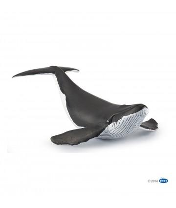 Baleineau