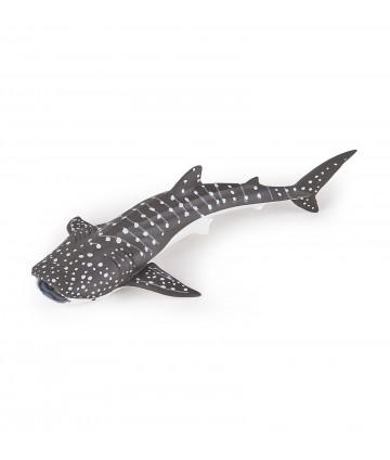 Jeune requin baleine